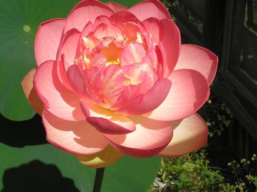 Demystifying Flower Essences